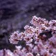 Spring004